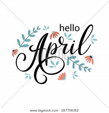 Hello April. Handwritten Lettering With Chamomile Flowers. Season Vector As Poster, Postcard, Greeti
