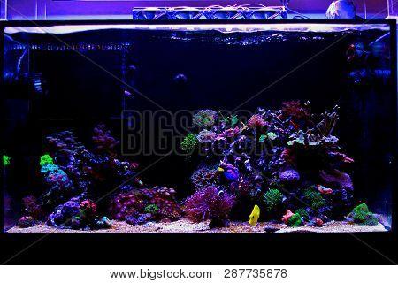Awesome Colorful Coral Reef Aquarium Fish Tank