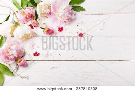 Delicate White Pink Peony With Petals Flowers And White Ribbon On Wooden Board. Overhead Top View, F