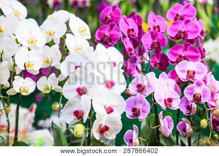 Assorted Fresh Colorful Orchid Flowers Background. Floral Arrangement, Wallpaper, Backdrop, Flower C