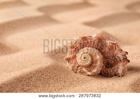 sea shell on beach in the sand. Sandy background with rippled lines and empty copy space and seashell.