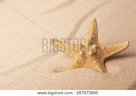 starfish on sandy beach. One single seastar on rippled sand of tropical shore.