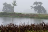 A misty and rainy morning overlooking a birdwatching pond in the Natal Midlands, South Africa. poster