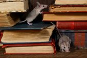 Close-up two young mice on  the old books on the shelf in the library. Concept of rodent control. Small DoF focus put only to one mouse on top of book. poster