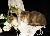 A calico cat looks at image in a mirror surrounded by lace, pearls and flowers, against a black backdrop poster