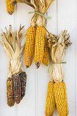 Fall Corn Decorations.