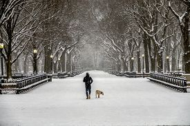 Central Park, Manhattan, New York City In Winter At The Mall In Snow Storm