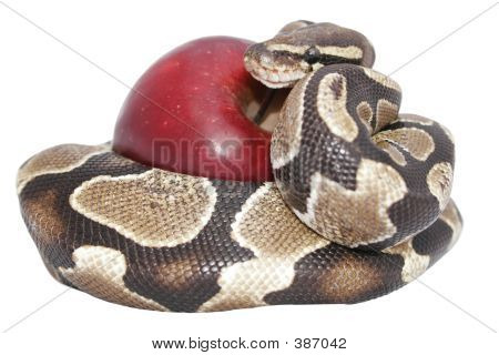 Snake And Apple