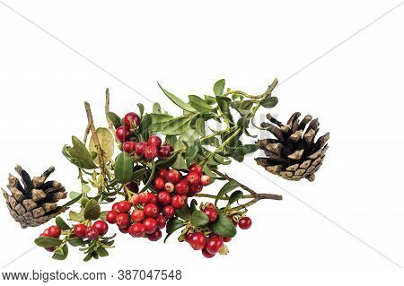 Close Up View Of Red Rowanberry Branch And Fir Cones Isolated On White Background.