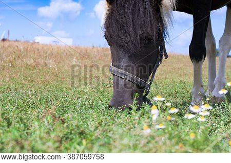 Portrait Of Beautiful Black Horse On  Ranch