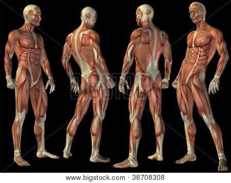 poster of High resolution concept or conceptual human or man 3D anatomy body with muscle isolated on black background as metaphor to medicine,sport,male ,muscular,medical,health,biology or fitness group or set