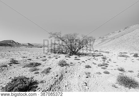 Breathtaking Landscape Of The Rock Formations In The Israel Desert In Black And White. Lifeless And