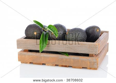 A wooden crate full of Hass Avocados on a white background with reflection. Horizontal Format.