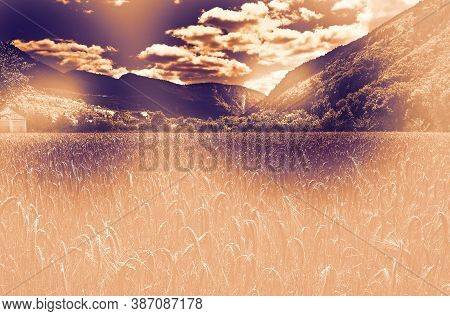 Desert Field In A Contemporary Style. Wheat Harvest In France.