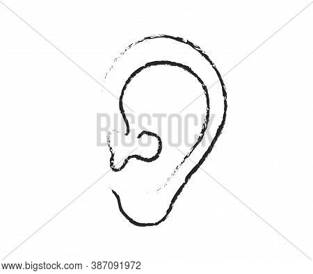 Ear On A White Background. Sketch. Vector Illustration.