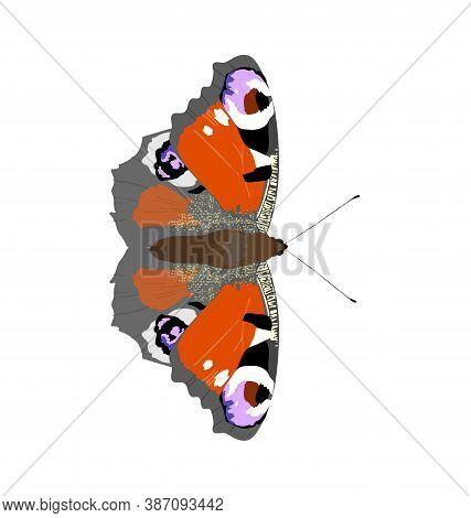 Aglais Io - Peacock Butterfly - Dorsal View - Flat Vector Isolated