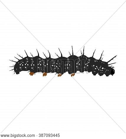 Aglas Io - Peacock Butterfly - Caterpillar - Side View - Flat Vector Isolated