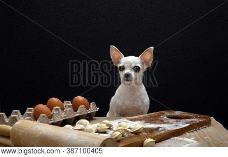 A White Chihuahua Sits At A Wooden Vintage Table, On Which Flour And Raw Dumplings Lie. Black Backgr