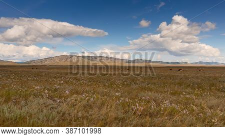 Huge Grass Field In The Steppe Of Khakassia, South-east Russia. Landscape With A Grass, Hills And Th