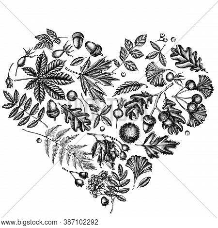 Heart Design With Black And White Fern, Dog Rose, Rowan, Ginkgo, Maple, Oak, Horse Chestnut, Chestnu