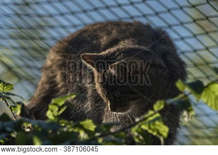 Felis Silvestris Cat Near Fence On Tree With Summer Morning Sunny Shine