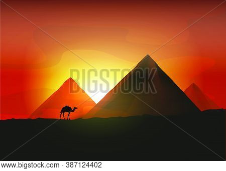 Camel Near The Egyptian Pyramids. Vector Illustration