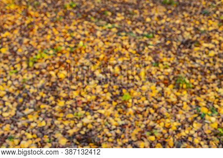Autumn Golden Season Abstract Unfocused Background Concept Of Yellow And Orange Falling Leaves