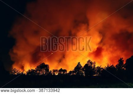 Forest Fire At Night, Wildfire After Dry Summer Season, Burning Nature In Russia, Voronezh Region.