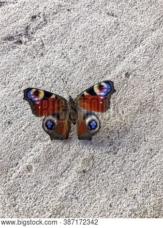Beautiful Butterfly In Its Natural Habitat. Close Up