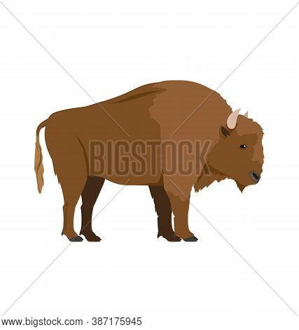 Bison Bonasus - European Bison - Male - Side View - Flat Vector Isolated