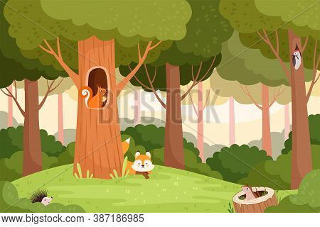 Forest Landscape. Trees With Holes For Wild Animals House In Wooden Trunk For Birds Squirrels Fox Ve