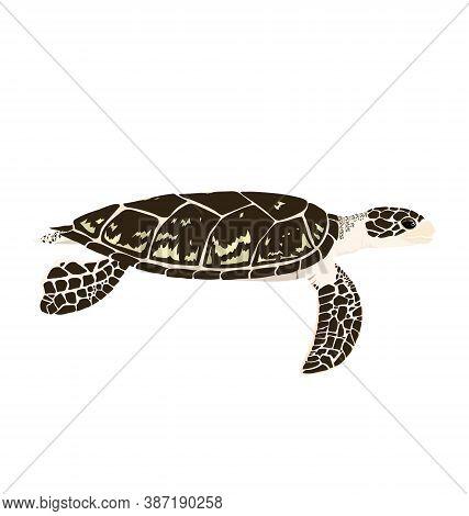 Eretmochelys Imbricata - Hawksbill Sea Turtle - Side View - Flat Vector Isolated