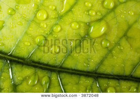 Close Up Droplets On The Leaf