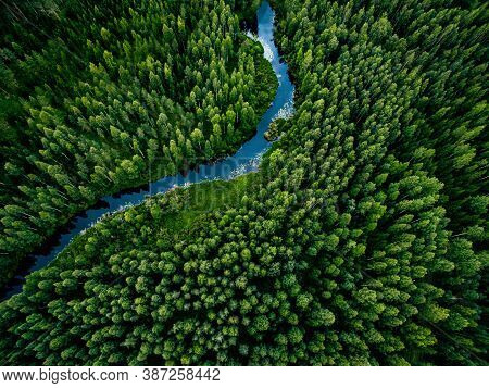 Aerial View Of Green Grass Forest With Tall Pine Trees And Blue Bendy River Flowing Through The Fore
