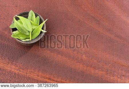 Fresh And Green Stevia Leaves - Stevia Rebaudiana.