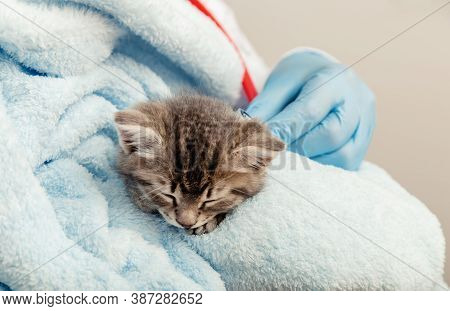 Veterinarian In Gloves Listening With Stethoscope Cats Heartbeat, Tabby Kitten. Little Ill Baby Cat