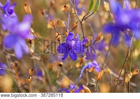 Autumn Glade With Bright Colors And Blurry Background Close-up