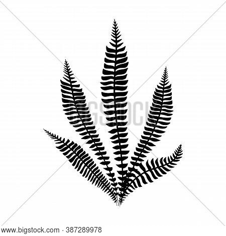 Black Fern Leaves Vector. Isolated Black On White. Minimalist Tropical Leaf. Trend Botanical Outline