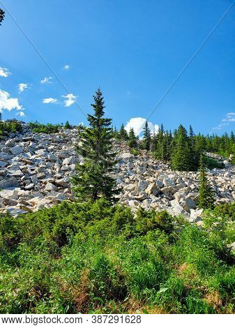 Landscape Of Christmas Trees On The Rocky Mountains, Close-up. Picturesque Mountain Landscape On A S