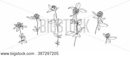 Hand Drawn Wild Flower Collection. Outline Clover With Leaves Painted By Ink. Black Isolated Sketch