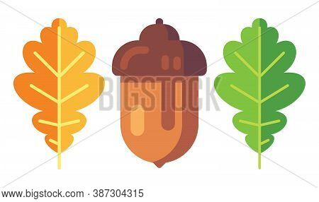 Acorn With Leaves. Oak Symbol Of Autumn. Isolated Acorn On White Background. Vector Illustration.