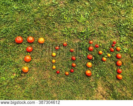 Tomato Lettering. Word Made From Vegetables. The Letters T, O And M, The Word Tom Are Lined With Red
