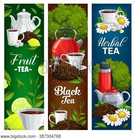 Herbal, Fruit And Black Tea Vector Banners. Tea Porcelain Cup With Beverage, Chamomile Flowers And M