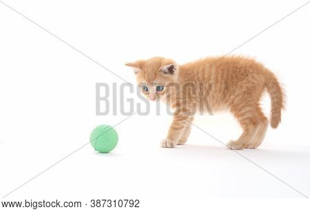 Cute Yellow Kitten With Green Ball On White