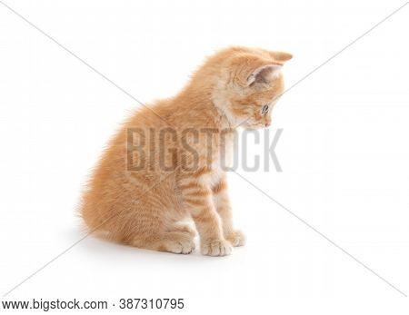 Cute Yellow Kitten On White Background