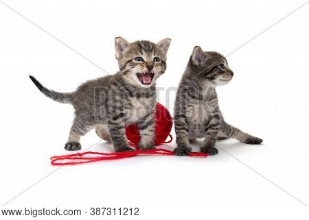 Two Cute Baby Tabby Kittens With Ball Of Red Yarn Isolated On White Background