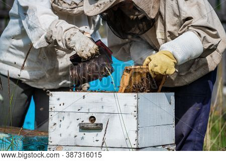 Close-up Of Beekeeper Smoking A Beehive Honeycomb With Fumigating Smoke To Place The Frames. Fumigat