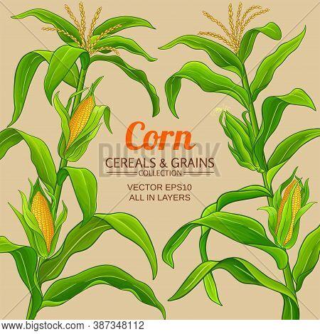 Corn Plant Vector Frame On Color Background