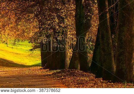 Autumn landscape. Autumn trees with golden autumn foliage in the city October autumn park, sunny autumn nature scene. Glow filter applied. Bright autumn sunny view