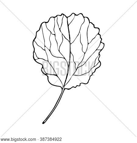 Vector Contour Leaf. Hand-drawn Outline Sketch Illustration On White Background Isolated. Ornamental